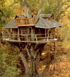 awesome-tree-houses-to-live-in-plextm4b