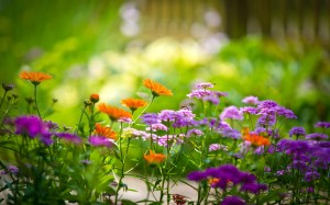 Nature-Multicolor-Flowers-Garden-Summer-Bees-Depth-HD-Photo