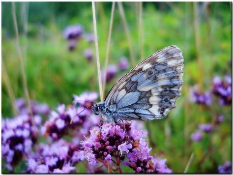 meadow-53551_960_720