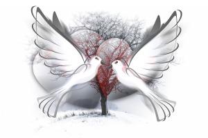 peace-dove-588991_960_720